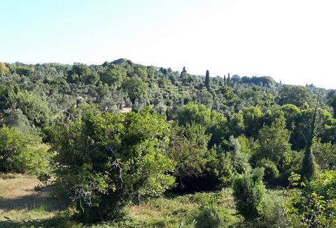 For sale plot of 974 sq.m. in the town of Kymi, Place Livadi (behind the police station), Evia. Within city plan, even, buildable. Suitable for private and commercial construction. On the plot of 974 sq.m. can be built: 1) For ground floor 50% of the...